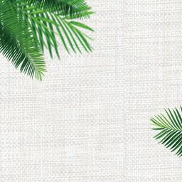 绿色叶子植物简约背景