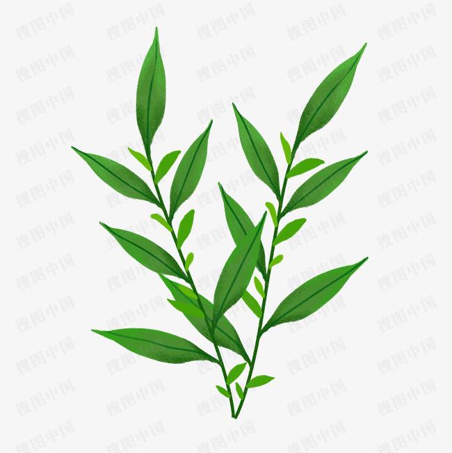 手绘插画植物绿叶子