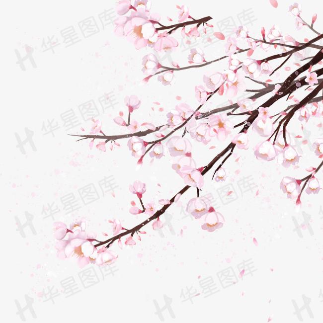 唯美樱花春日赏花