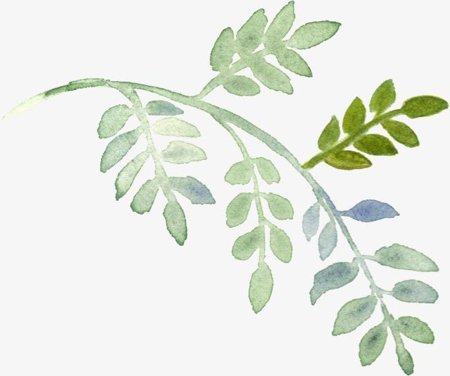 水彩 树叶 手绘图片