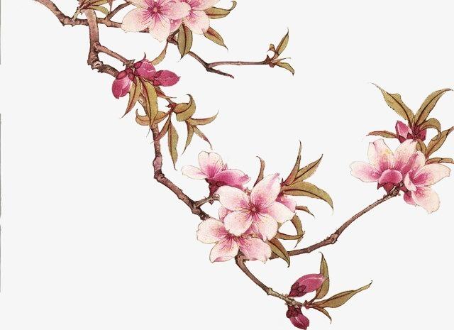 搜图中国 元素 >手绘花朵  花朵 花枝 树枝 手绘 复古 古风 中国风