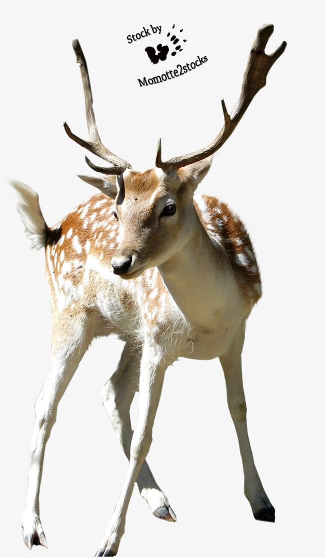 素描 手绘图片 卡通动物素材 卡通 动物图片 动物剪影 梅花鹿 雄性