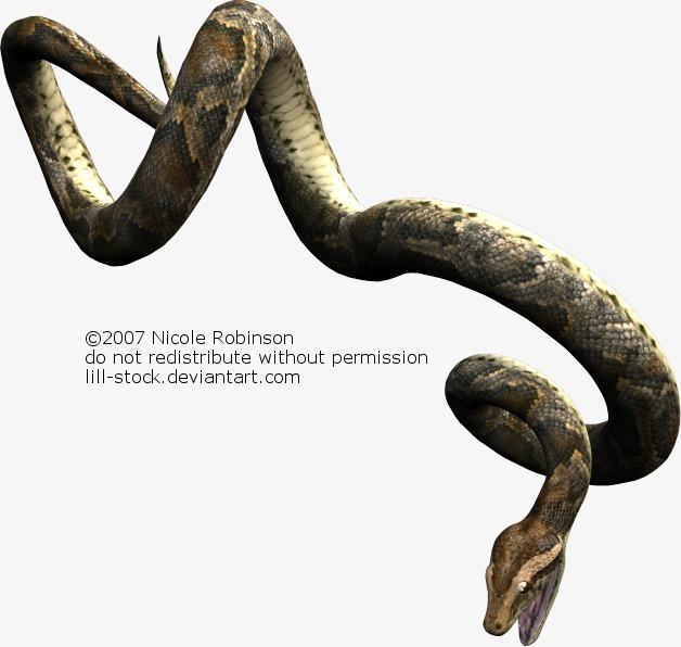 人和蛇杂交的画像
