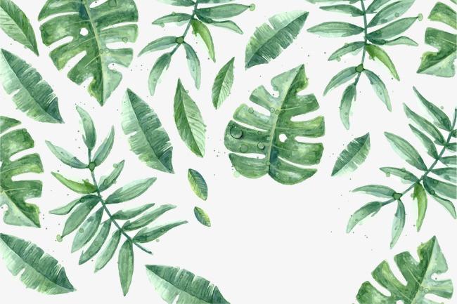 手绘 小清新 叶子 植物 花草