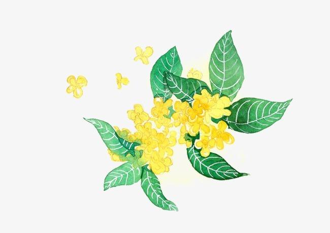 搜图中国 元素 >手绘花卉  桂花   黄色   花朵   树叶纹理  绿色
