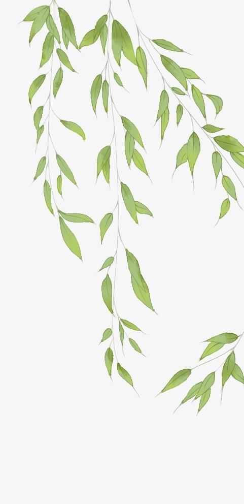 搜图中国 元素 >柳叶  柳叶 古风 中国风 工笔画 【本作品下载内容为图片