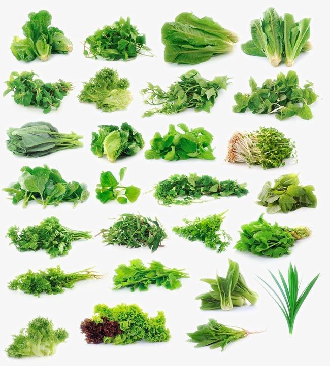 元素 >新鲜的绿色蔬菜  新鲜的绿色蔬菜高清图片  黄瓜 包菜 西兰花