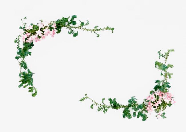>蔷薇小粉花边框  视频框素材 免扣视频框png素材 蔷薇花边框 藤蔓