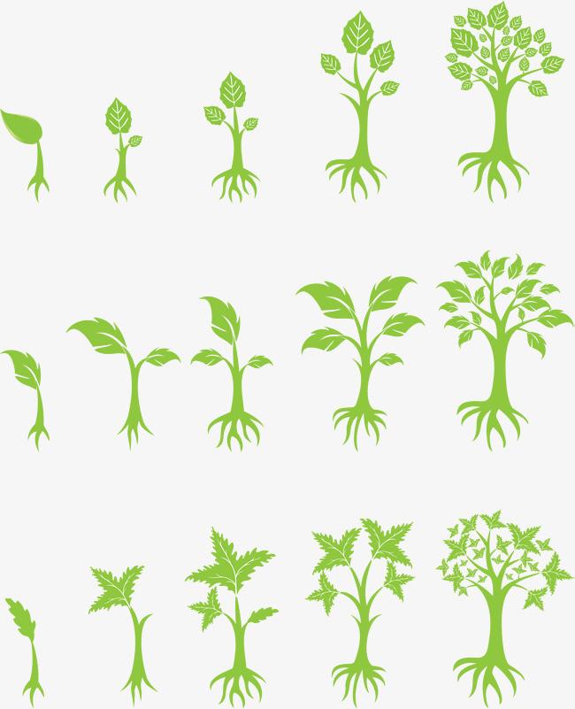 搜图中国提供独家原创植物生长过程下载,此素材图片已被下载5次,被图片