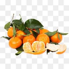 成熟的桔子圖片