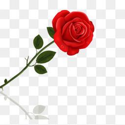 一支紅色玫瑰花