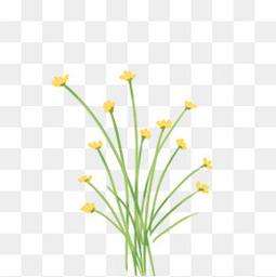 黄花  绿植
