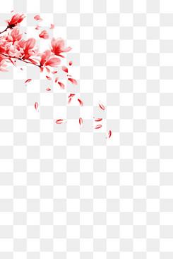 半圆形漂浮樱花