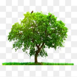 大树 树木 树叶 树